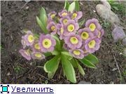 Растения для альпийской горки. - Страница 2 1a6b181e1ef6t