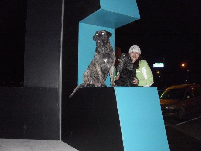 Собаки Татьяны Моисеенковой, кот Мензурка - Страница 3 8c7c6ace92ee