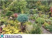 Cад Людмилы Ивановой из черкасс 782816fec7d8t