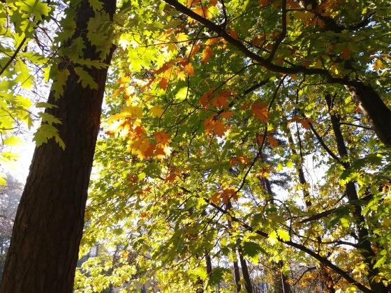 Осень, осень ... как ты хороша...( наше фотонастроение) - Страница 8 A681441fb278