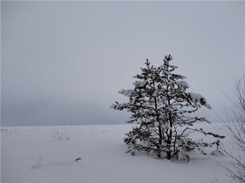 Белое море - вот ты какое.... Ce8b82501c7b