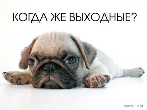 "1 годик форуму "" СОЛНЕЧНЫЕ  БУЛЬМАСТИФЫ"")))) Db7473ab2b43"