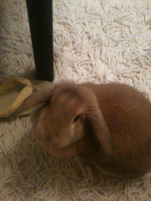 Кролики, декоративные и не очень) Fac242bdc482