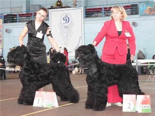 2хCACIB 25-26 февраля  2012 в Минске - Страница 3 D8a79afd0767