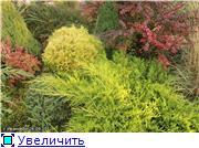 Cад Людмилы Ивановой из черкасс 7489cd1282b8t