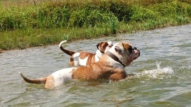Собаки питомника Carpen Diaz - Страница 2 17f2d3518a7c