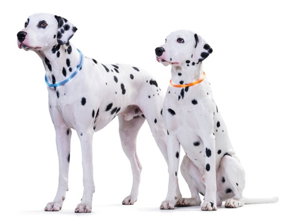 Интернет-магазин Red Dog- только качественные товары для собак! - Страница 3 Dc365036f8c2