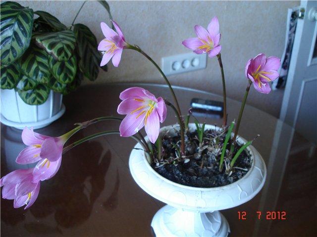 мои  цветочки-детки 923821120e4e