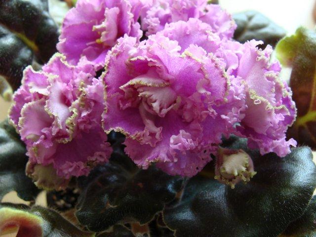 Мои цветочки - Страница 30 085dfb1e9191