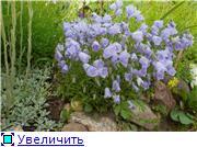 Растения для альпийской горки. F8abd2fe0d29t