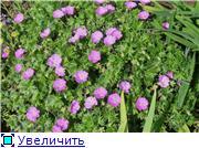 Растения для альпийской горки. - Страница 2 Eb27c2681b95t