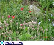 Растения для альпийской горки. - Страница 2 4c6cfd62ef2ft