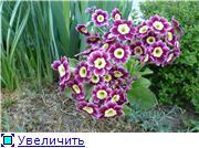 Растения для альпийской горки. - Страница 2 Be92e9edccd9t