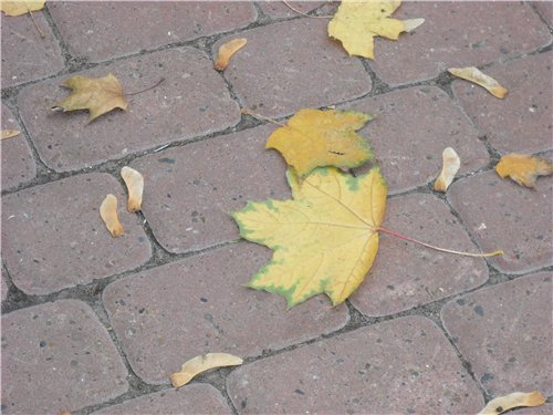 "Фотографии участников конкурса ""Осенняя кантата"" A8203bc6d7a5"