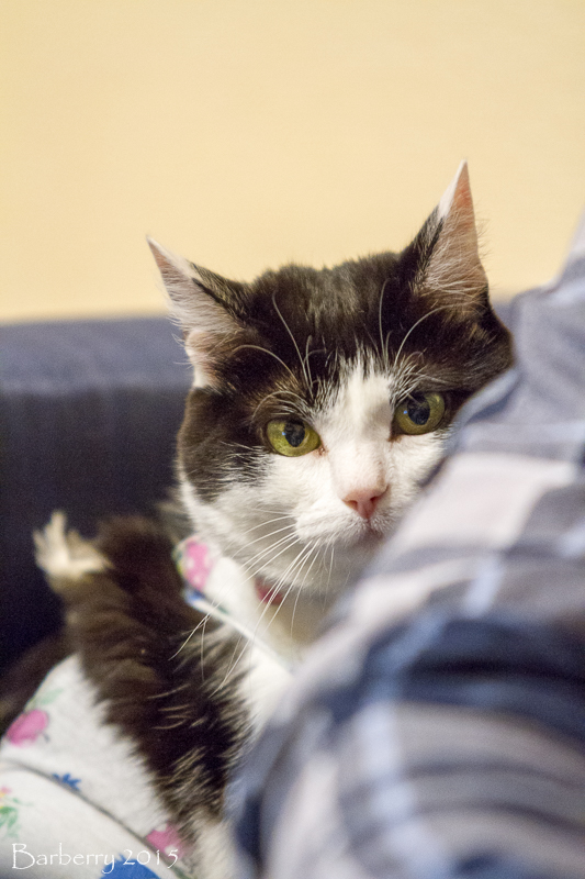 Кошка ищет новый дом 8a054c62f9ca