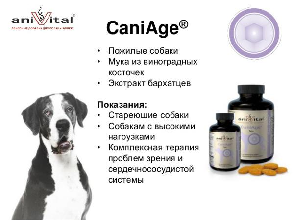 Интернет-магазин Red Dog- только качественные товары для собак! - Страница 5 35fe196dc599