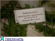 Выставка орхидей в Государственном биологическом музее им. К.А.Тимирязева 11105bcb3931t