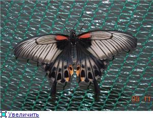 Выставка живых бабочек в Хабаровске. 21b24d90d600t