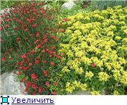 Растения для альпийской горки. 52522dec0a40t