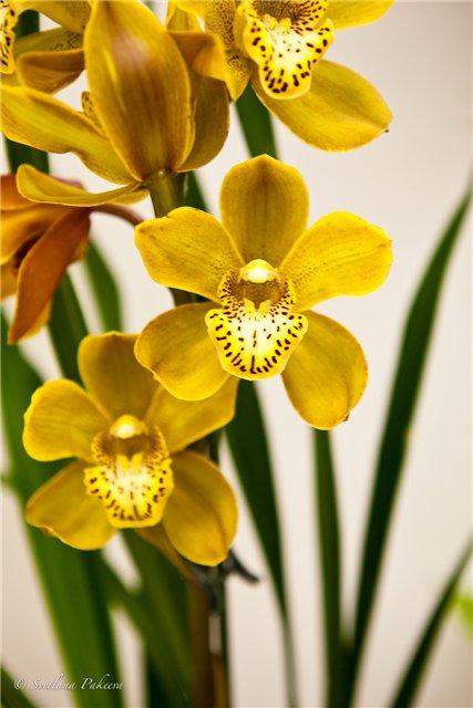 Выставка орхидей в Государственном биологическом музее им. К.А.Тимирязева 7d704fe71744