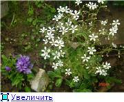 Растения для альпийской горки. - Страница 2 500347e2068dt