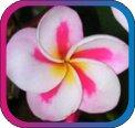 продам семена экзотических растений - Страница 3 78bfc932f0ec