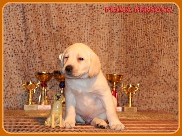 """Питомник """"Прима Персона"""". Мои собаки-моя жизнь! 7362038fb5fc"""