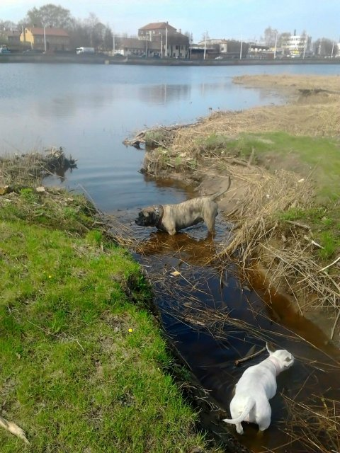 Наши собаки, друзья и гости, кот Мензурка - Страница 31 F043777a85f9