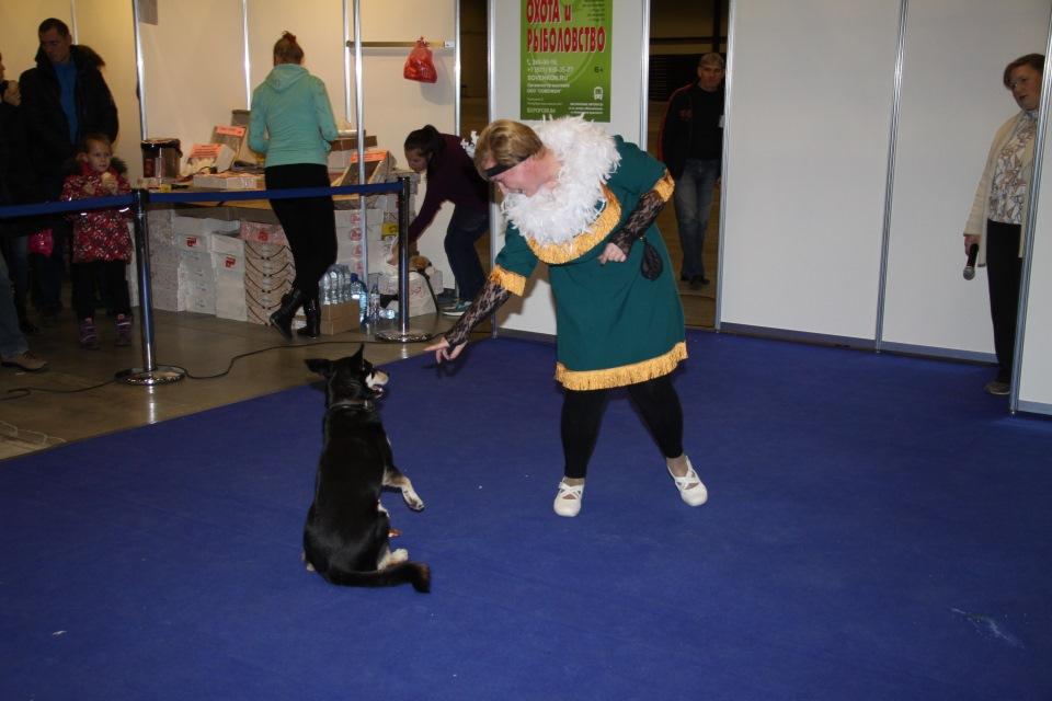 Танцы с собаками - Страница 3 02dbaf961924