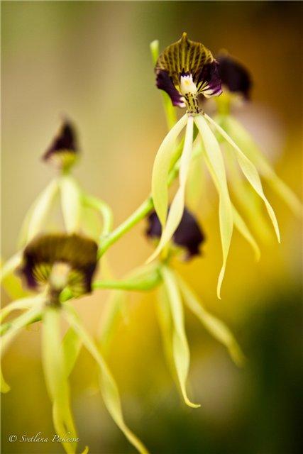 Выставка орхидей в Государственном биологическом музее им. К.А.Тимирязева Eefda6a5444f