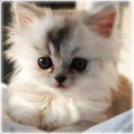 Аватары с животными - Страница 3 A8d4490c9c1c