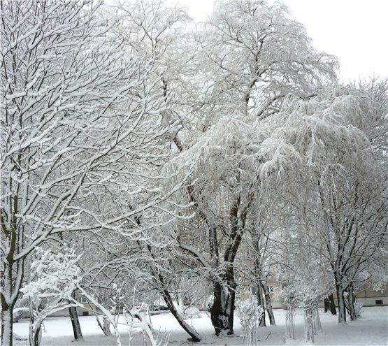 Зимняя сказка на наших фотографиях - Страница 6 D8838b2c8b31
