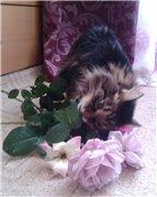 Кошки из бамбука и акрила - Страница 4 F06b3b5ef625t
