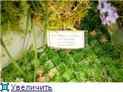 Выставка орхидей в Государственном биологическом музее им. К.А.Тимирязева 19916698772dt