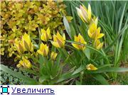 Растения для альпийской горки. 81c3cf5e90d3t