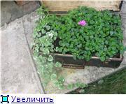 Ужас в саду - Страница 2 4a9ec0587a23t