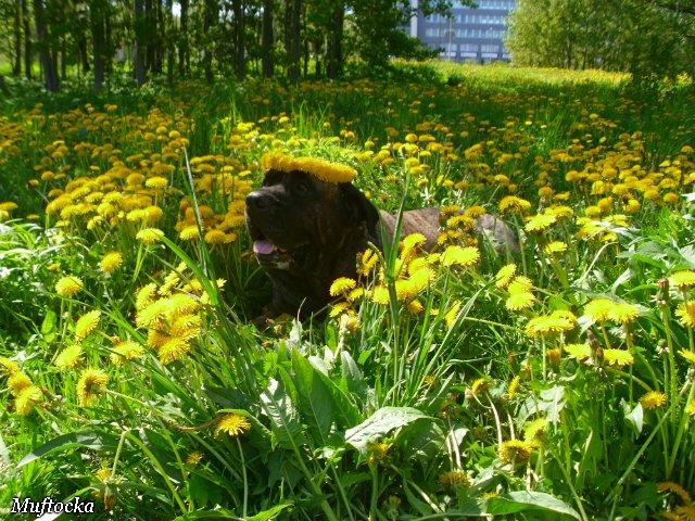 Собаки Татьяны Моисеенковой, кот Мензурка - Страница 4 75f3b7951d99