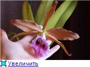 Sevgilim ( мои любимые) 19e4f9fa403et