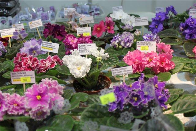 XIX Международная выставка Ландшафт и Приусадебное хозяйство-2012 Fd13d545ea4d