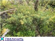 Cад Людмилы Ивановой из черкасс Dec036cd9722t