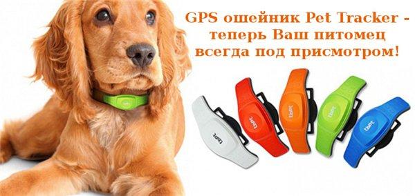 Интернет-зоомагазин Red Dog: только качественные товары для  - Страница 7 B4359b8e2af1