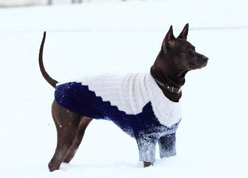 Magic Charm - ошейники, поводки, ринговки, вязаная одежда и другие аксессуары для собак Ea8090d21d93