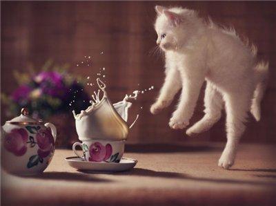 Сама по себе гулёна (о кошках) - Страница 2 9722856c3996