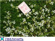 Растения для альпийской горки. - Страница 2 D031f1c6447ft