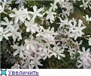 Растения для альпийской горки. 78bc8589101bt