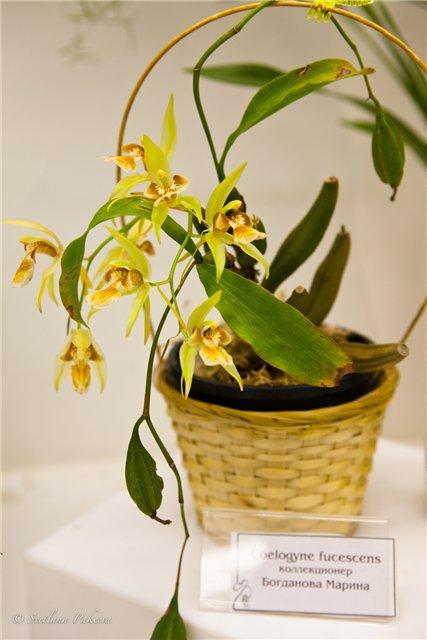 Выставка орхидей в Государственном биологическом музее им. К.А.Тимирязева 782e8bb408f8
