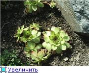 Растения для альпийской горки. 857c94c2c39dt