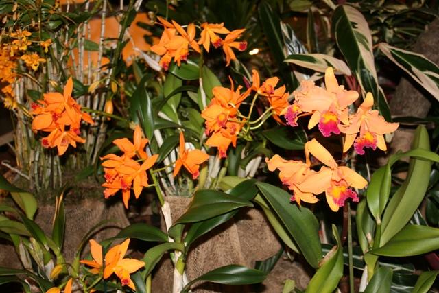 Выставка орхидей в Дрездене (март 2012г.) - Страница 2 9f3e73efb876