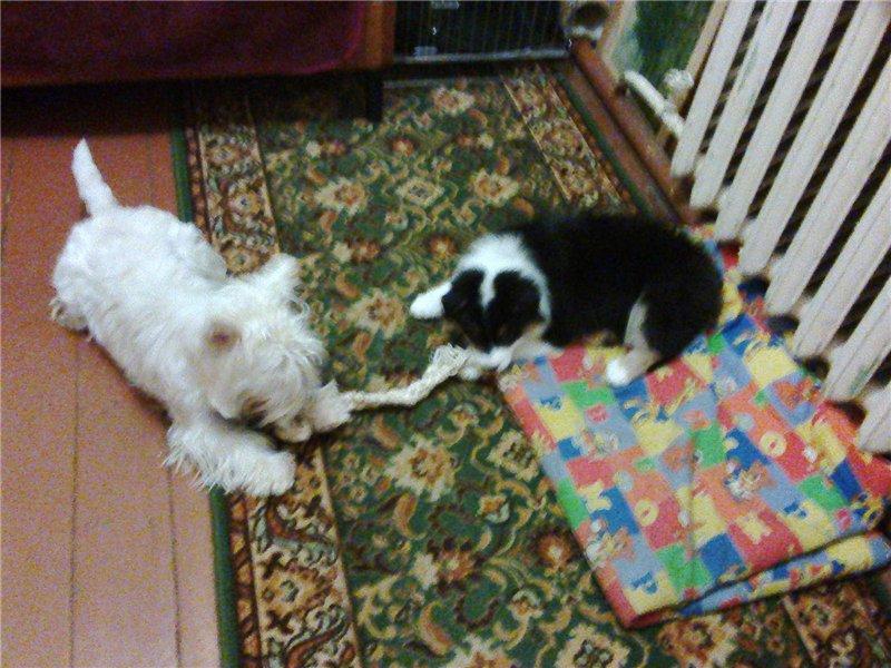 Мои собаки: Зена и Шива и их друзья весты 5b773bf4cd1b