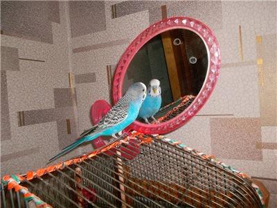 Наш красавчик попугай Кузя 3ed9dc3abd67